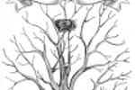 "Дерево пожеланий. Для ""Город подарков"""