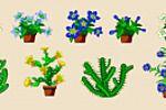 Цветы и кактусы, Цветочная Усадьба