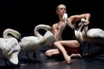 Премьера балета с участием живых лебедей