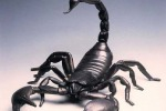 Яд голубого скорпиона в борьбе с раком