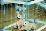 Как выбрать клетку для животных: маленькие секреты серьезной пок