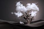 Дерево погоды (фото-арт)