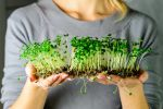 Користь мікрозелені для організму