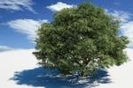 Просто дерево