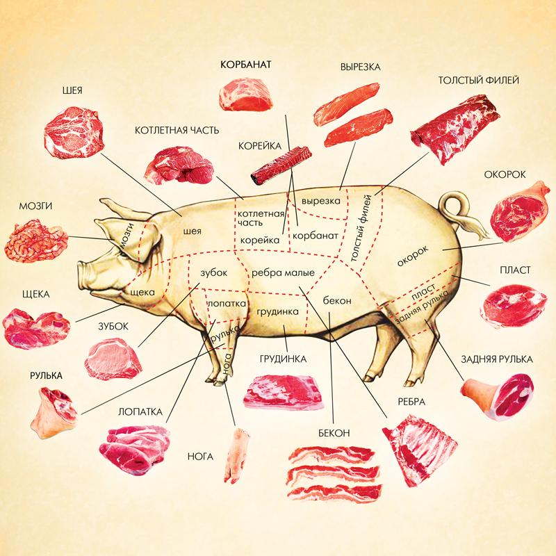 Для плаката по разделке свинины