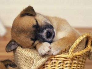 Где лучше спать собаке