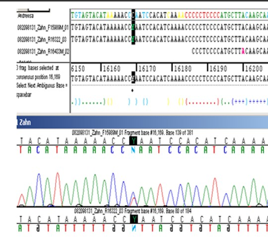 Фрагмент перевода ДНК-анализа останков Царской семьи
