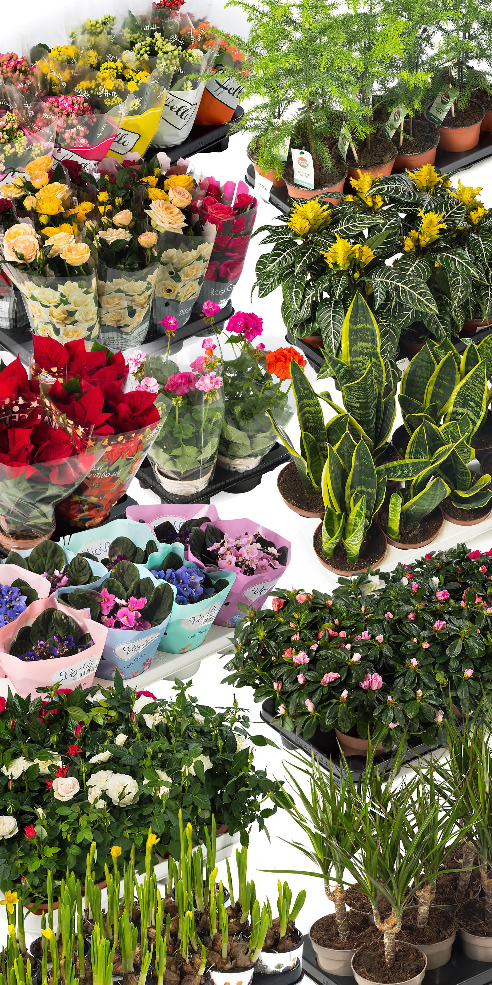 Ретушь растений
