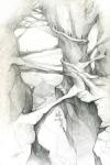 Скалистые деревья