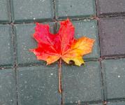 Одинокий осенний лист