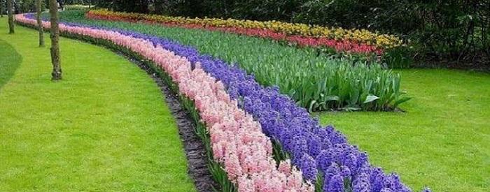 Сад: весенние луковицы, уже сейчас!